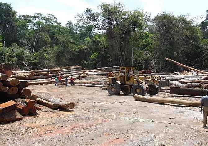 Colombia perdió 219 mil 973 hectáreas de bosques en 2017, según el Ministro de Ambiente y Desarrollo Sostenible