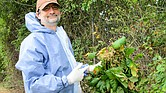 El microbiólogo John Jelesko ha aprendido a tomar precauciones cuando está cerca de Poison Avy.