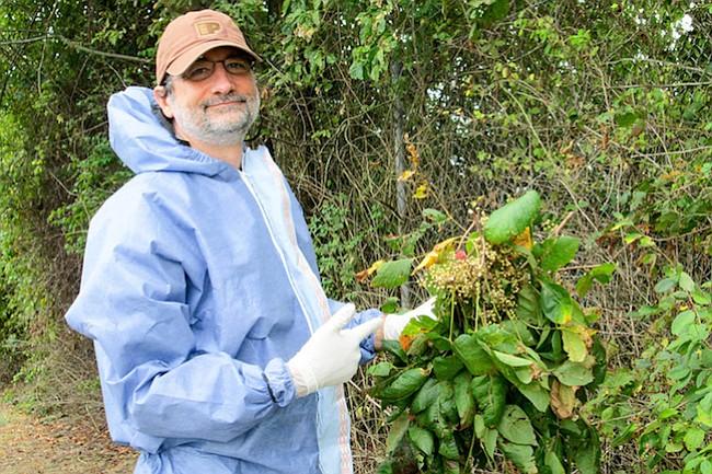 Cómo luchar contra Poison Avy, la planta que puede arruinar tu verano