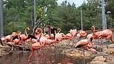 """La colonia de flamingos en la exposición """"Caribbean Coast"""" del Stone Zoo"""