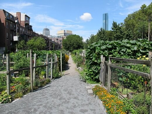 Alcaldía invertirá en jardines comunitarios de Boston