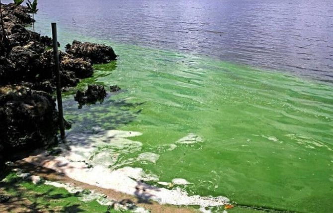 Decretan estado de emergencia en Florida por derrame en el lago Okeechobee
