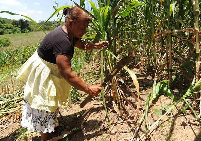Oriente de El Salvador es afectado por una sequía severa