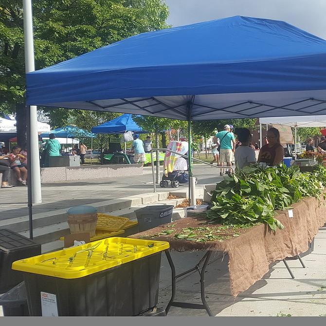 East Boston Farmer's Market