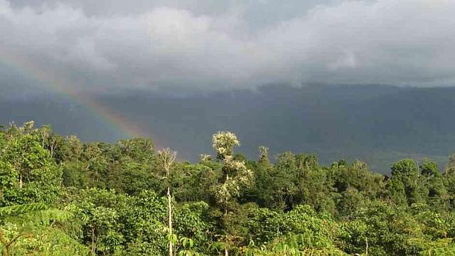 COLOMBIA. Los bosques de Galilea