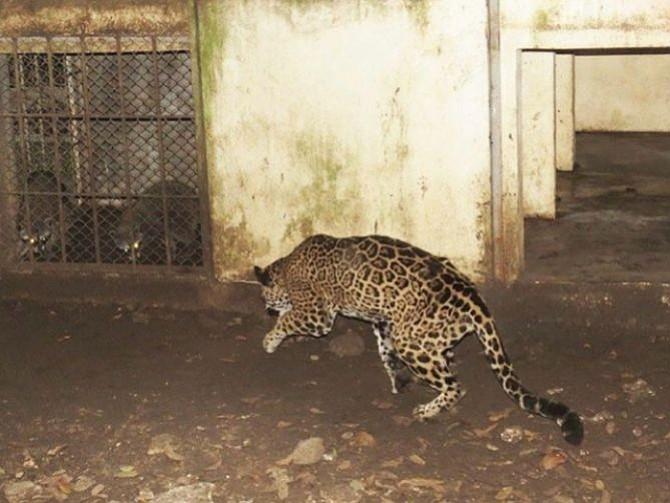 MÉXICO. El animal murió, al parecer, por malos manejos
