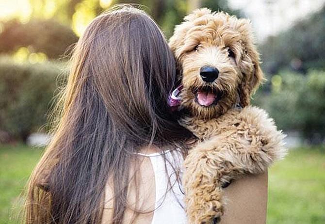 Festival canino en Cedar Park
