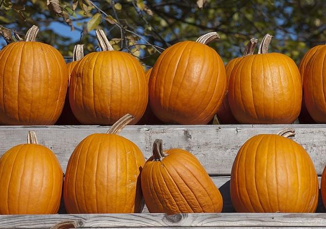 Cinco cosas para disfrutar del otoño