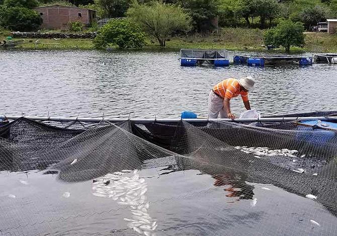 Agricultores de El Salvador preocupados por muerte de miles de peces