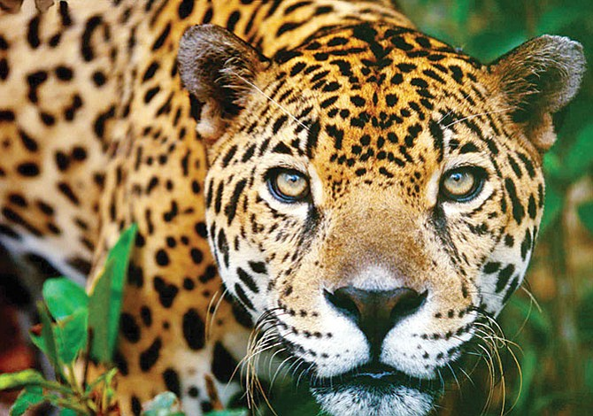 Animales sagrados en peligro de extinción