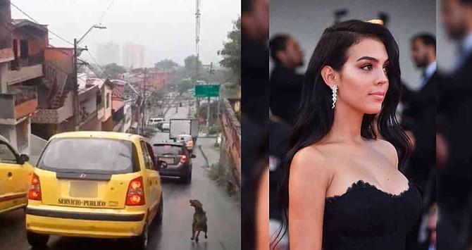 Novia de Cristiano Ronaldo se ofreció a adoptar el perrito que persiguió a un taxi de Medellín