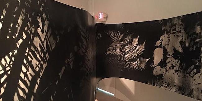 TÉCNICA. El artista usa en sus instalaciones uno de los primeros procedimientos utilizados en fotografía: el fotograma.