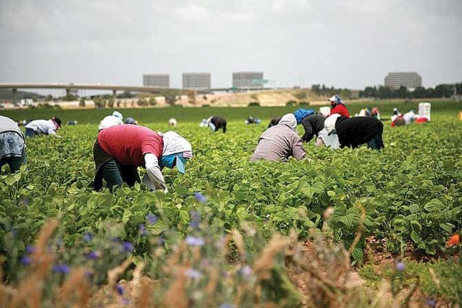 Agricultores son perjudicados por política antiinmigrante
