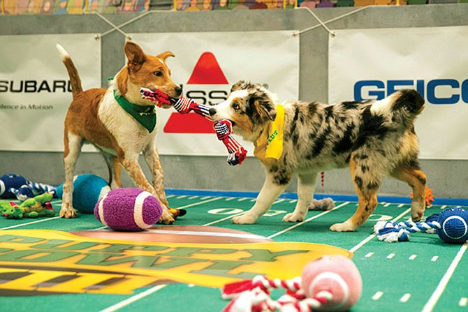 Regresa el Puppy Bowl