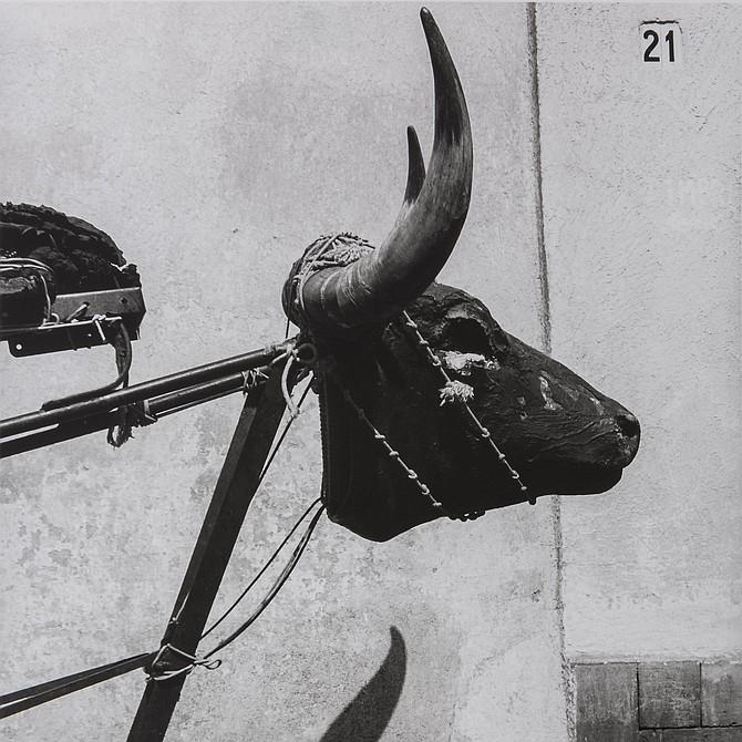 Little Bull, Coyoacán, Mexico City / Torito, Coyoacán, Ciudad de México, 1982 Graciela Iturbide (Mexican, born in 1942) Photograph, gelatin silver print *Col. Galería López Quiroga *© Graciela Iturbide *Courtesy, Museum of Fine Arts, Boston