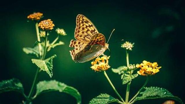 Para City Nature Challenge, captura fotografías de las especies de flora y fauna que encuentres en tu ciudad y súbelas a la aplicación iNaturalist.