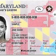 DOCUMENTO. Las licencias del Real ID tienen una bandera y estrella en la parte derecha superior.