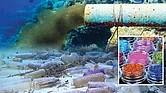 PURPURINA. El problema de estos trocitos brillantes de plástico es que tan pronto aterriza en el suelo se convierte en basura, lo que contribuye a una creciente crisis de contaminación con plásticos que amenaza la salud de la vida silvestre y los océanos del mundo.