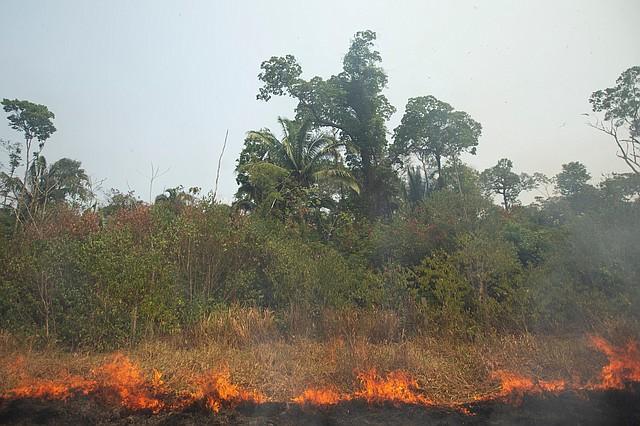 AMAZONÍA. El colorido y ruidoso paisaje que conforma la biodiversidad de la Amazonía brasileña dio lugar a un silencio estremecedor en las zonas devastadas por el fuego que devora parte de la selva, donde serpientes, peces y otros animales intentan escapar de las llamas que avanzan rápidamente. | Foto: Efe/Joédson Alves