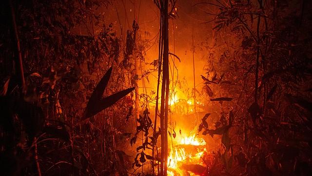 AMAZONÍA. Una vasta zona de selva se consume por las llamas de uno de los grandes incendios que azotan la Amazonía, el sábado 24 de agosto, cerca de Porto Velho, Brasil. | Foto: Efe/Joédson Alves