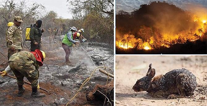 Arde la Amazonía