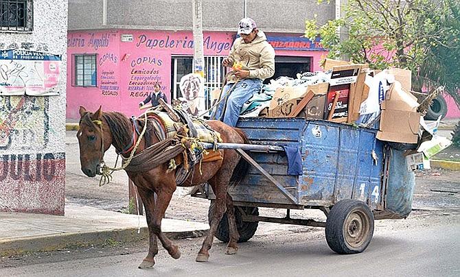 Prohíben uso de animales de carga en Nuevo León