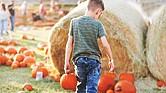 La Barton Hill Farms es perfecta para pasar un día en familia, tomar fotos y crear recuerdos. La granja cuenta con cerca de cinco mil calabazas en el huerto, que tiene una dimensión de tres hectáreas, y un amplio laberinto de maíz, las dos actividades favoritas de los visitantes.