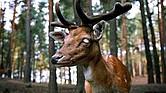 Caquerxia crónica (CWD), 'mal del ciervo zombie'.