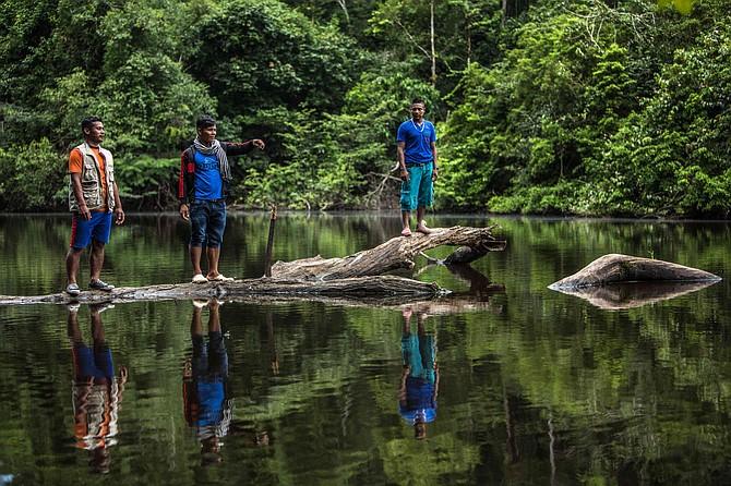 CONTAMINACIÓN. En los principales ríos de la Amazonia han encontrado altas concentraciones de mercurio en los peces, principal alimento de los indígenas. Foto: Juan Arredondo (alianza PNN-ACT).