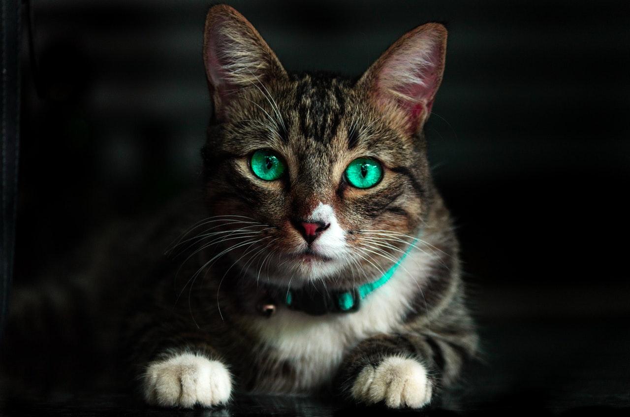 ANIMALES. Foto de referencia de un gatito