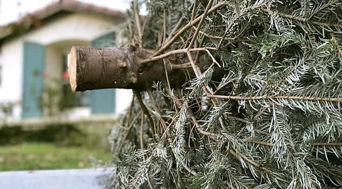 Recicle su árbol navideño.