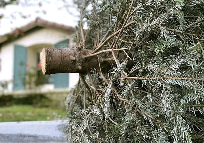 Recicle su árbol navideño
